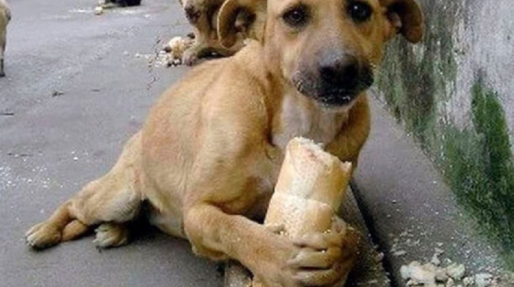 Sancionarán a quien alimente a perros callejeros