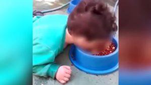 VIDEO: Madre obliga a su hijo discapacitado a comer comida para perros
